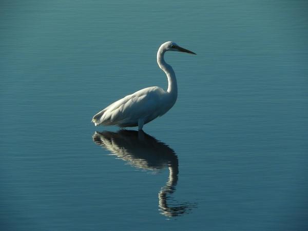 Zrkadlo ako odraz vo vode